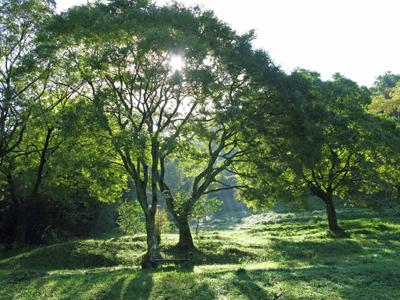 未来のために木を植える